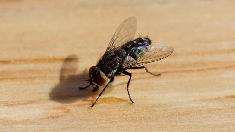 tenere lontano le mosche