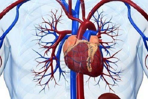 colesterolo-cuore