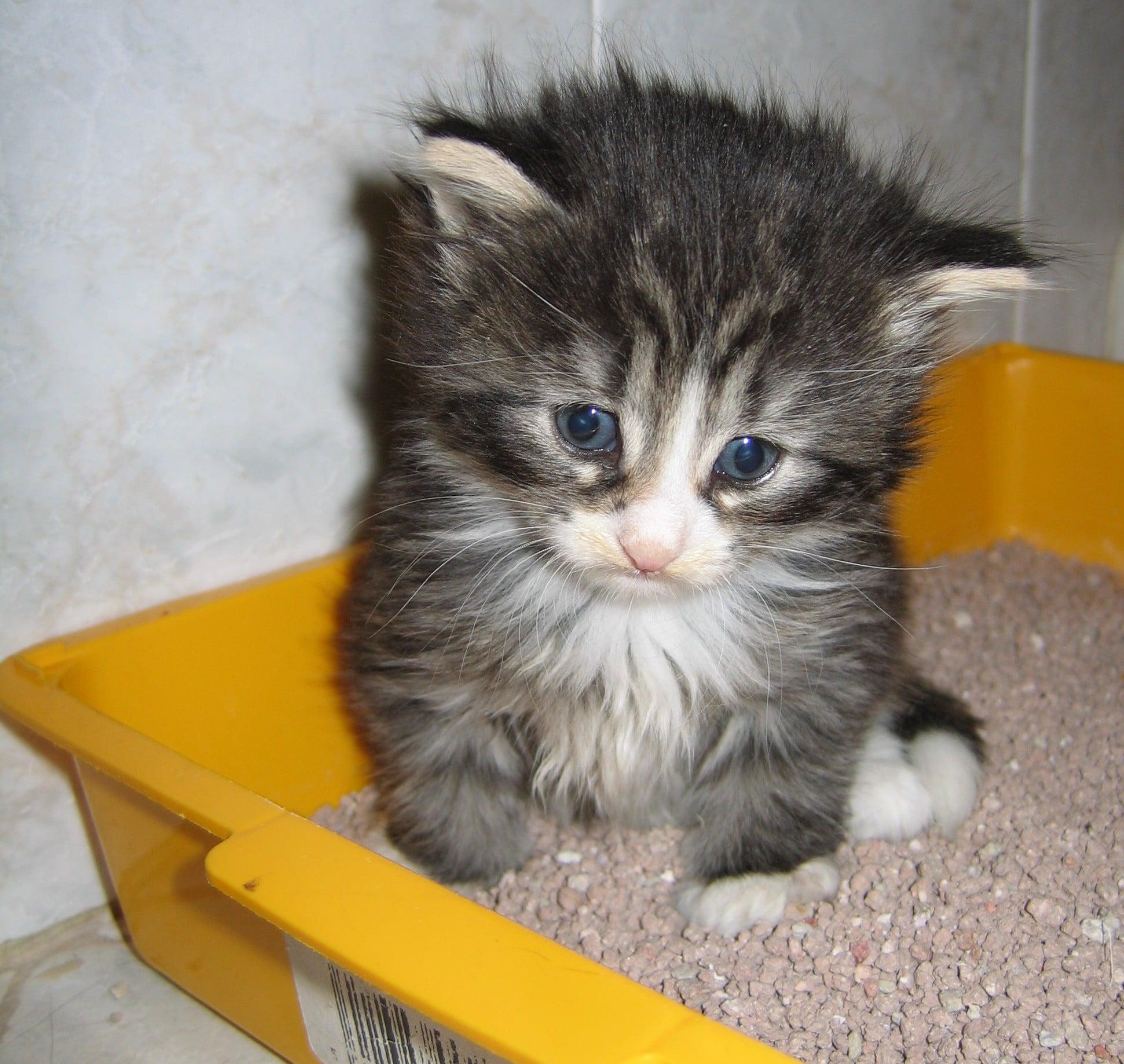Come pulire la lettiera del gatto - Gatto defeca per casa ...