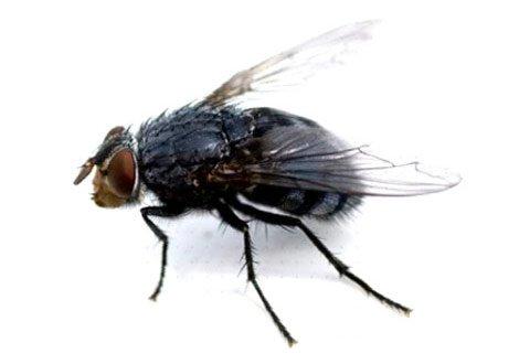 come-eliminare-mosche-in-casa