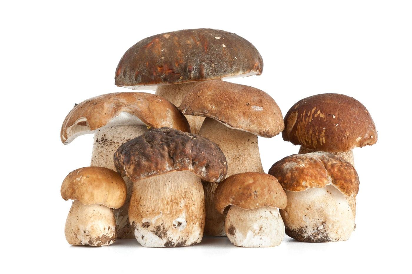 Risotto ai funghi freschi, ricetta - Cucinare Meglio