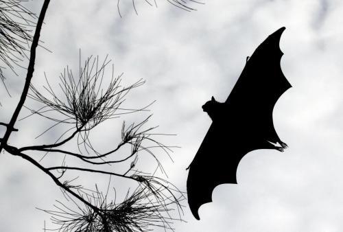 come-allontanare-i-pipistrelli