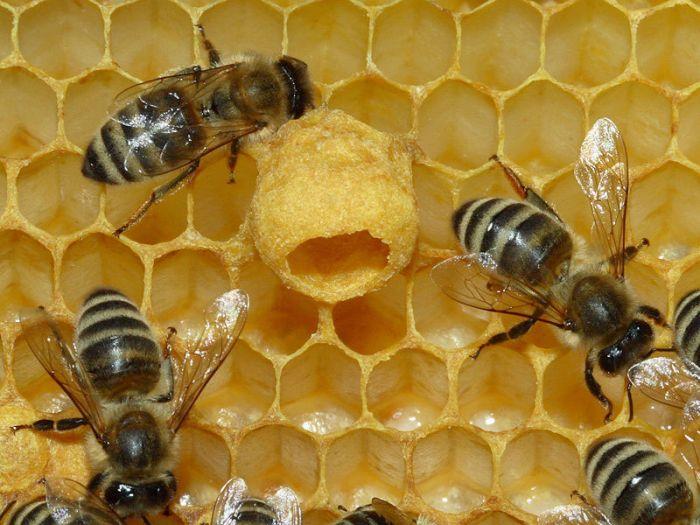 come-eliminare-api-vespe