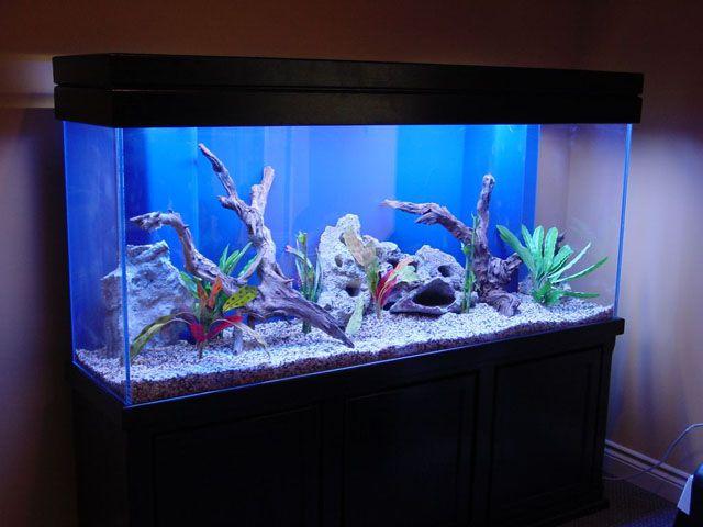 Come allestire un acquario di acqua dolce for Acquario in casa