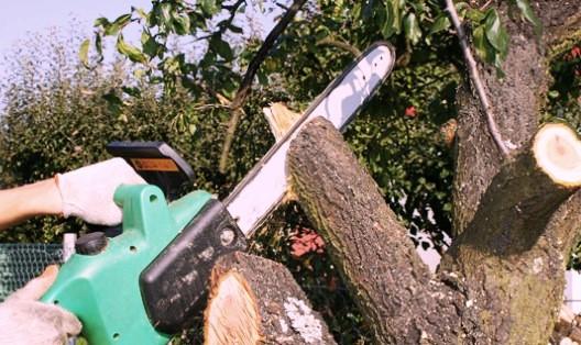 Come potare un albero - eComesifa.it