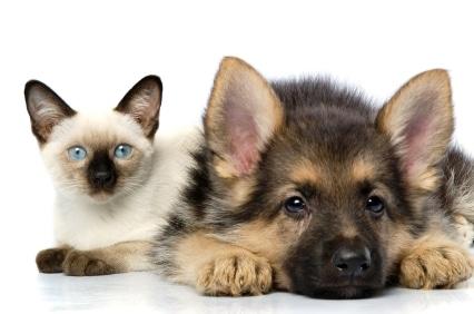 come-scegliere-nome-cane-gatto-animali