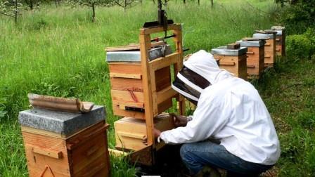 Come fare il miele in casa - Come fare i detersivi in casa ...