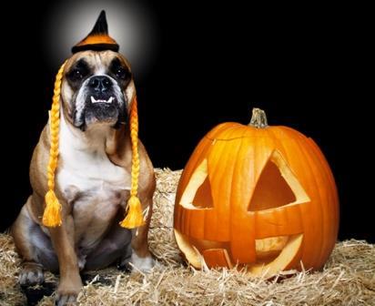 come travestire il tuo cane per halloween
