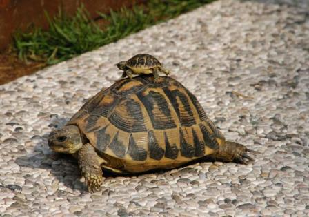 quanto vive una tartaruga
