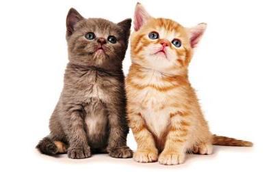 come-capire-gatti