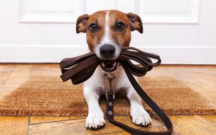 come-insegnare-al-cucciolo-fare-bisogni