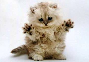 come-insegnare-gatto-graffiare