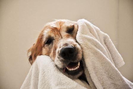 Come lavare il cane - Come fare il bagno al cane ...