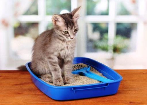 Lettiera per il gatto low cost