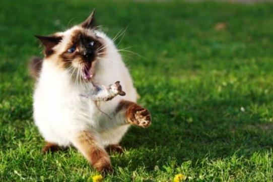 Come liberare il giardino dai gatti