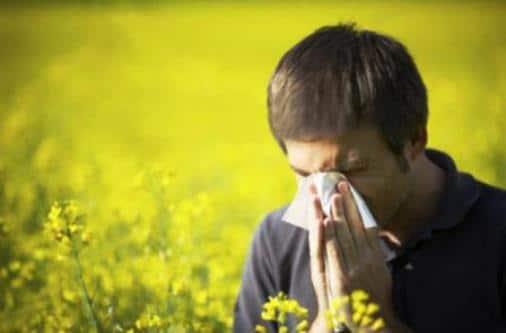 Come difendersi da pollini e allergeni vari - L allergia porta sonnolenza ...