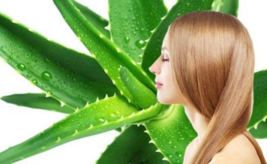 Come fare uno shampoo naturale con aloe vera for Tipi di aloe