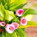 arredare casa con i fiori e le piante
