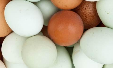 come indurire guscio uovo