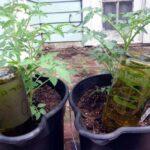 innaffiare piante