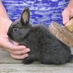 prendersi cura di un coniglio