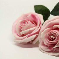 mantenere la rosa bella