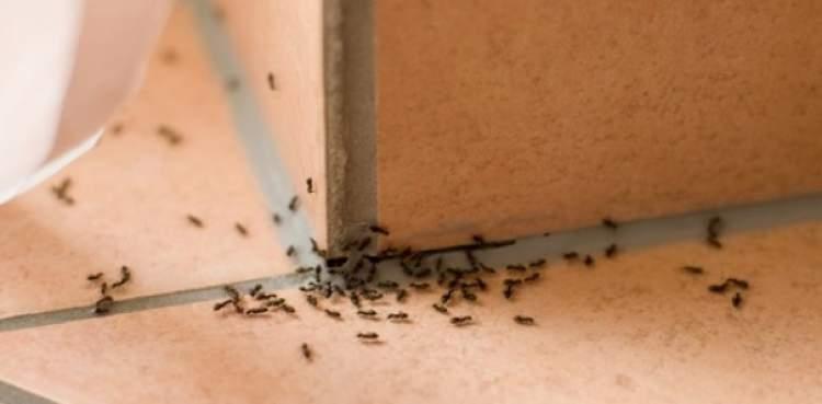 Come far crescere una pianta carnivora - Rimedi per le formiche in casa ...