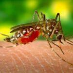prurito di zanzara alleviare