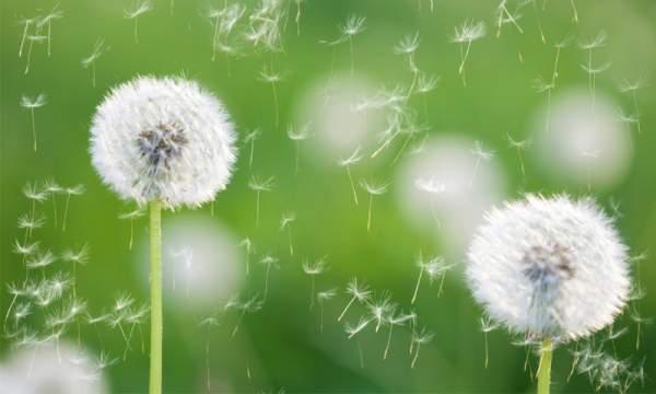 polline e allergia