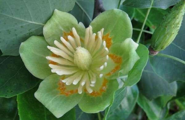 fiori verdi per fare i colori