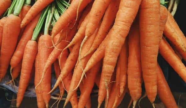 raccolta delle carote