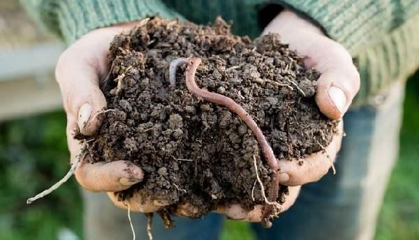 coltivazioni biologiche a casa