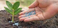 fertilizzante organico fai da te