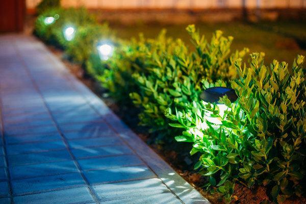 illuminazione delle piante da giardino