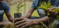 piantare alberi in amazzonia