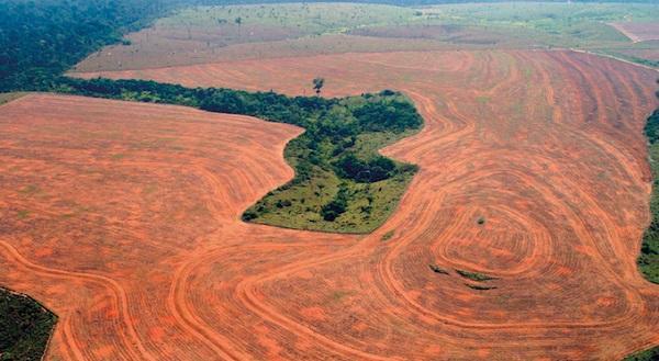 deforestazione amazonia