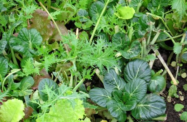 verdure che crescono in inverno