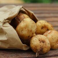 coltivare le piante delle patate a casa