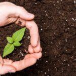 fare il fertilizzante con i rifiuti