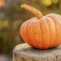 come si conserva la zucca di halloween