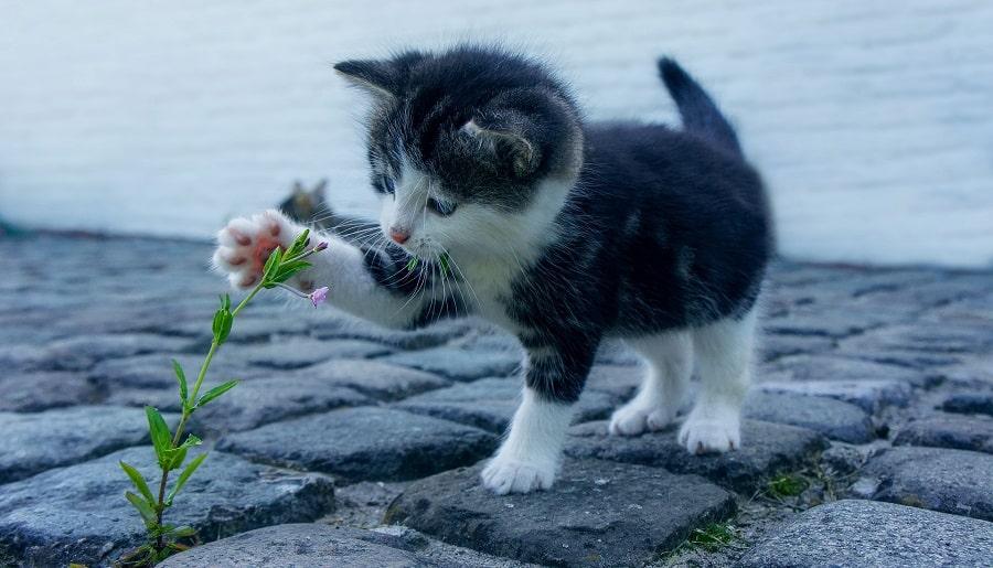 capire il comportamento del gatto