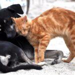 capire il comportamento del cane e del gatto